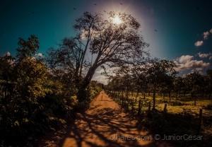 Paisagem Natural/Sertão