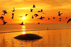 /Liberdade é um poema que se escreve com asas