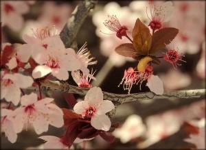 /Natureza: Belezas, cores e detalhes 35/36