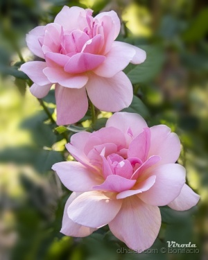 /Flores