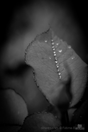 Macro/Alinhas as lágrimas....