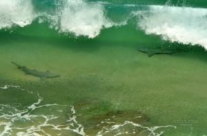 Outros/Baia do Sancho - Tubarões - Fernando de Noronha -