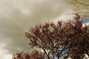 """/""""O Regresso da Primavera"""""""