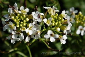 Macro/pequenas flores