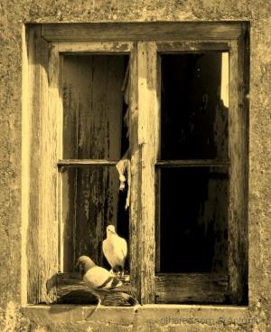 /A velha janela - II (ler)
