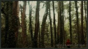 /Capuchinho vermelho e o bosque que  era uma vez