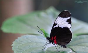 Paisagem Natural/Butterfly