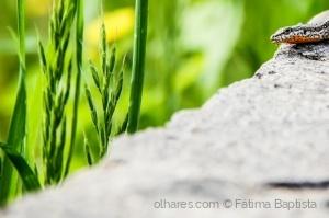 Macro/Fauna e Flora