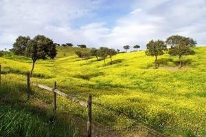"""Paisagem Natural/""""Campo florido do Alentejo.."""""""