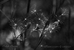 Abstrato/Foi a chuva o vento e o frio.