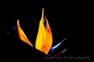 Macro/Falar em flores e cores