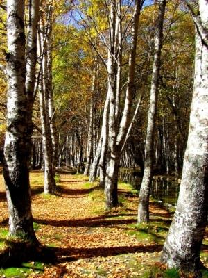 /caminho de Outono