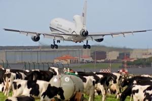 /Voando sobre... um pasto com vacas!