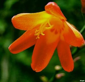 /Flor[es]...