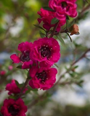 /A Deusa das flores
