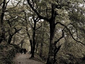 /fadas e duendes em Glendalough