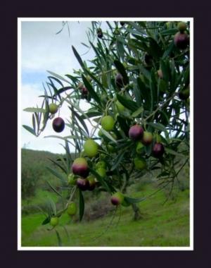 Paisagem Natural/um ramo...