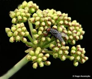 /A mosca e o seu repouso