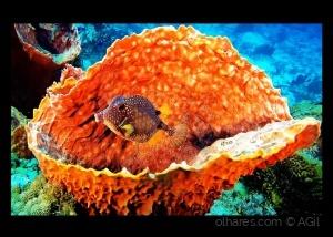/Underwater