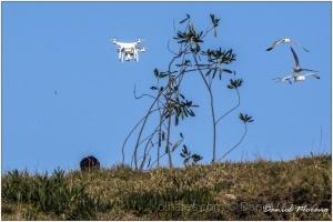 Fotojornalismo/Perseguição do drone