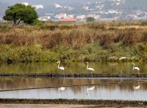 /Os flamingos chegaram!!