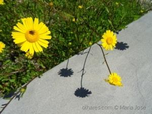 Macro/Sorrisos amarelos (ler pf)