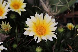 /Sol em forma de flor