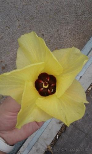 Outros/Flor de Amarela