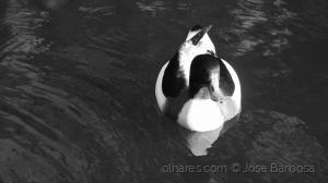 Animais/O regresso do Pato Donald ( 6 ) .
