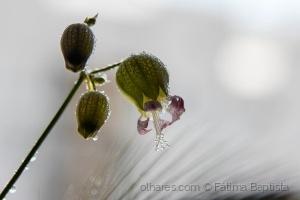 /Simples são as flores