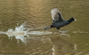 /Correndo sobre a água ....