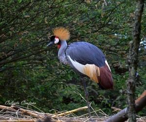/Aves em via de extinção.