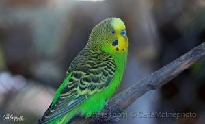 /Amarelo e Verde-cores do Brasil