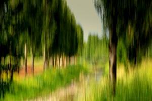 /Entre Árvores