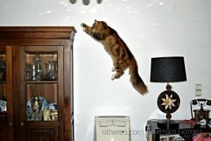 /O voo do gato!