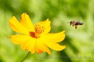 /Néctar à vista