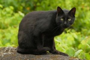/O gato preto