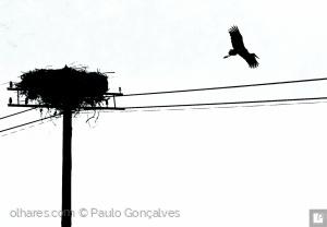 /Nas asas do vento