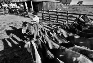 /Cavalos