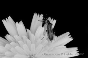 Macro/Vida de inseto