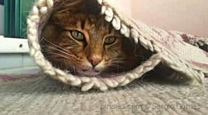 /Gato escondido...
