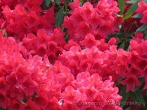 /Flores.