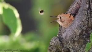 /Anda cá abelhinha ....