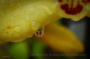 /Drops