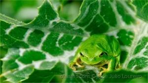 /Rela verde