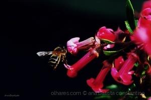 /Em busca do néctar