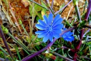 Paisagem Natural/Coisas da Primavera - 2