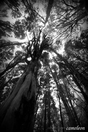 Outros/Árvores das bruxas..