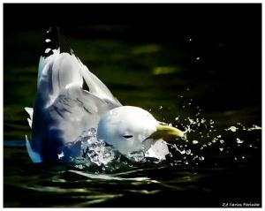 /Brincadeiras na água!