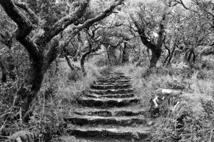 /Floresta relíquia (ver texto)